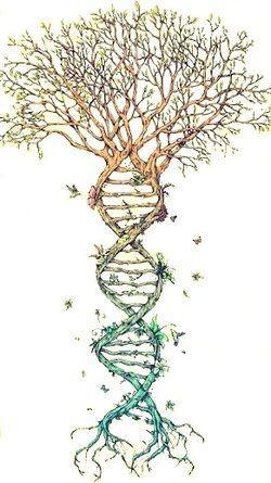 Adn genealogie